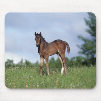 Thoroughbred Foal Standing in the Grass Mouse Mat