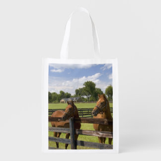 Thoroughbred horse farm in Marion County,