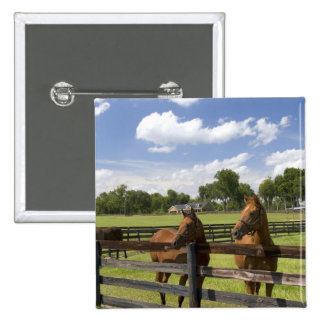 Thoroughbred horse farm in Marion County, 15 Cm Square Badge