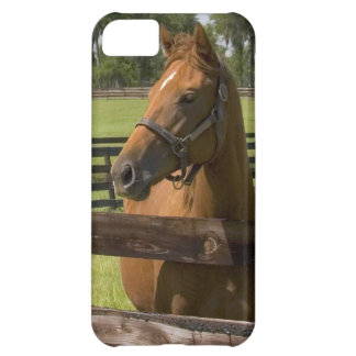 Thoroughbred horse farm in Marion County, iPhone 5C Case