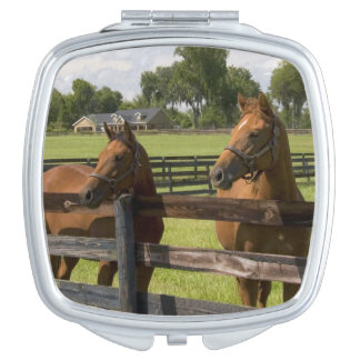 Thoroughbred horse farm in Marion County, Makeup Mirror