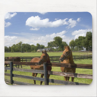 Thoroughbred horse farm in Marion County, Mouse Pad