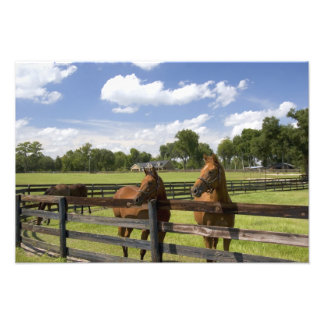 Thoroughbred horse farm in Marion County, Photographic Print