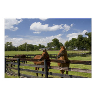 Thoroughbred horse farm in Marion County, Poster