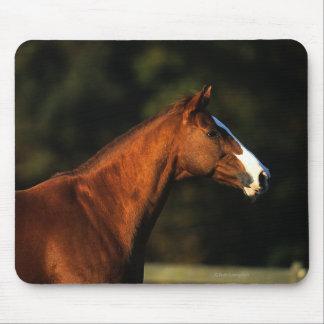 Thoroughbred Horse Headshot Mouse Pad