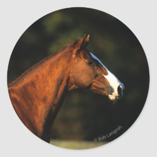Thoroughbred Horse Headshot Round Sticker