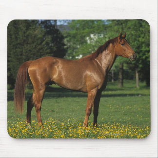 Thoroughbred Horse in Flowers Mouse Pad