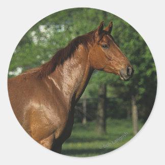 Thoroughbred Horse in Flowers Round Sticker