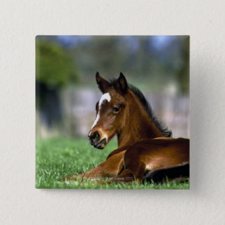 Thoroughbred Horse, Ireland 15 Cm Square Badge