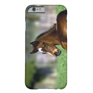 Thoroughbred Horse, Ireland Barely There iPhone 6 Case