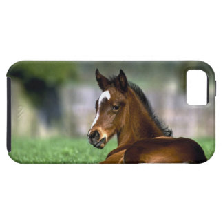 Thoroughbred Horse, Ireland Case For The iPhone 5