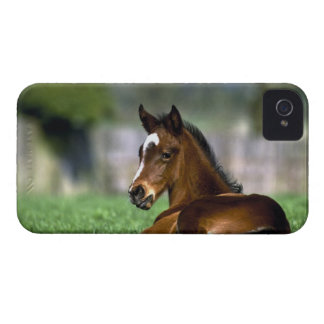 Thoroughbred Horse, Ireland iPhone 4 Case-Mate Cases