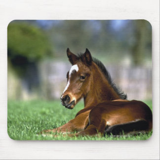Thoroughbred Horse, Ireland Mouse Mat