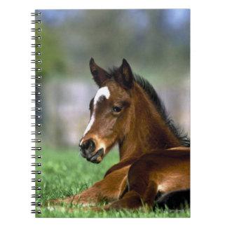 Thoroughbred Horse, Ireland Note Books