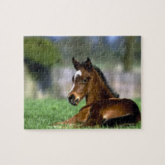 Thoroughbred Horse, Ireland Puzzles