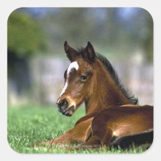 Thoroughbred Horse, Ireland Square Sticker