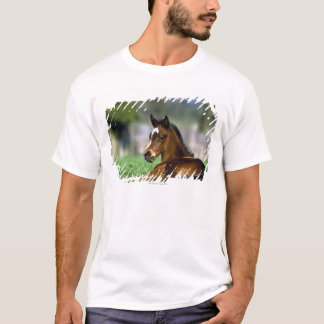 Thoroughbred Horse, Ireland T-Shirt