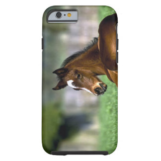 Thoroughbred Horse, Ireland Tough iPhone 6 Case