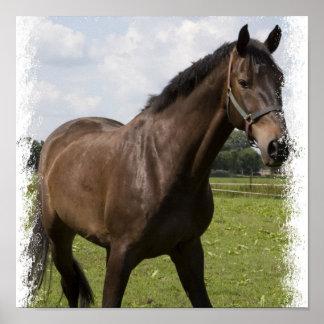 Thoroughbred Horse Print