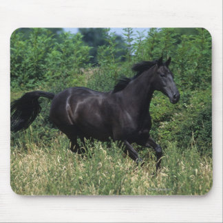 Thoroughbred Horse Running in Grass Mouse Mat