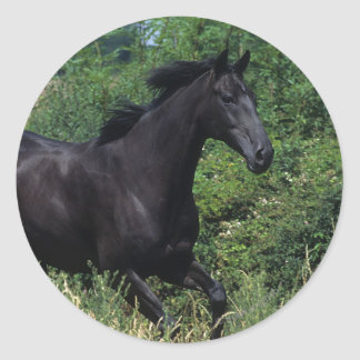 Thoroughbred Horse Running in Grass Round Sticker