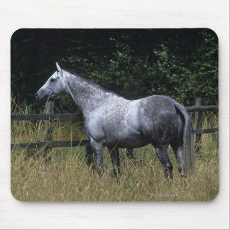 Thoroughbred Horse Standing by Fence Mouse Pad