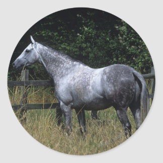 Thoroughbred Horse Standing by Fence Round Sticker