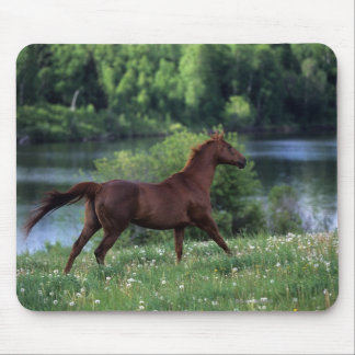 Thoroughbred Horse Standing in Flowers Mouse Pad