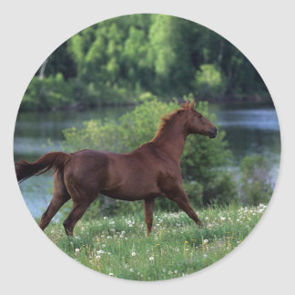 Thoroughbred Horse Standing in Flowers Round Sticker