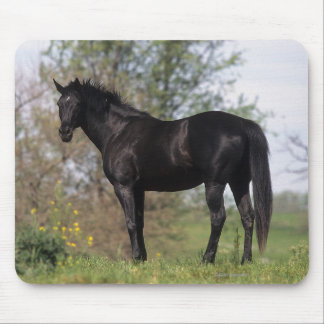 Thoroughbred Horse Standing Mouse Mat