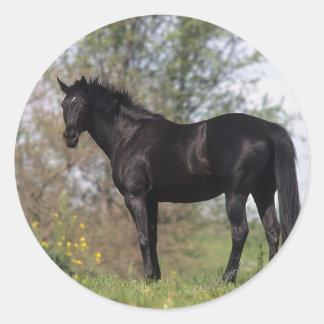 Thoroughbred Horse Standing Round Sticker