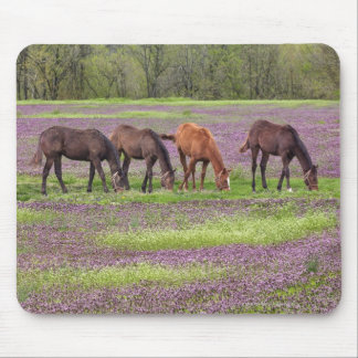 Thoroughbred horses in field of henbit flowers mouse mat