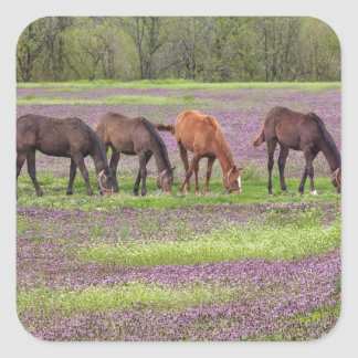 Thoroughbred horses in field of henbit flowers square sticker