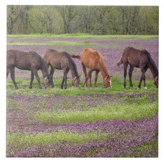 Thoroughbred horses in field of henbit flowers tile