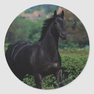Thoroughbred Horses in Flower Field Classic Round Sticker