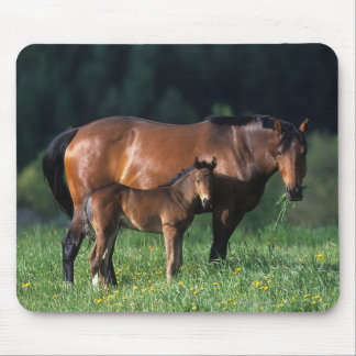 Thoroughbred Mare & Foal 1 Mouse Mat
