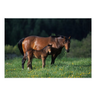 Thoroughbred Mare & Foal 1 Poster