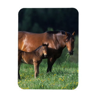 Thoroughbred Mare & Foal 1 Rectangular Photo Magnet