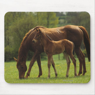 Thoroughbred Mare & Foal 2 Mouse Mat