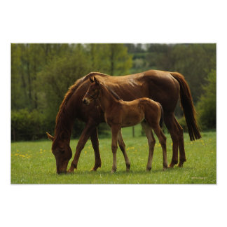 Thoroughbred Mare & Foal 2 Poster
