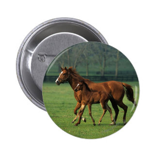 Thoroughbred Mare & Foal 3 6 Cm Round Badge
