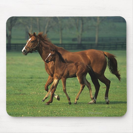 Thoroughbred Mare & Foal 3 Mouse Mat