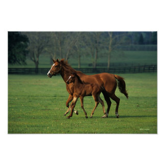 Thoroughbred Mare & Foal 3 Poster