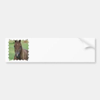Thoroughbred Race Horse Bumper Sticker Car Bumper Sticker