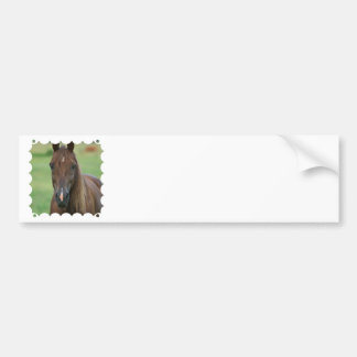 Thoroughbred Race Horse Bumper Sticker