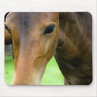Thoroughbred Selections Mouse Pad