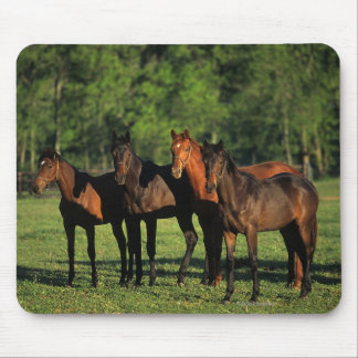 Thoroughbred Yearlings Mouse Pad