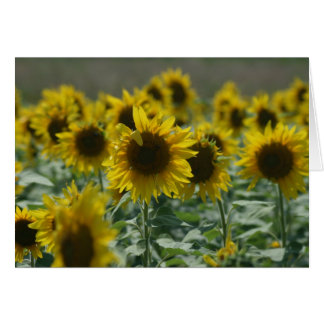 """Those August Blooms""  Note Cards"