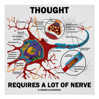 Thought Requires A Lot Of Nerve (Neuron / Synapse) Poster