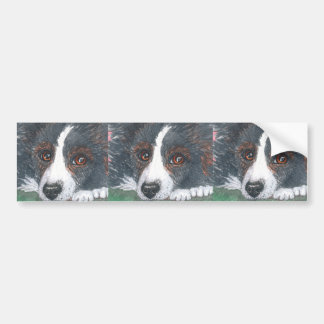 Thoughtful Border Collie Dog Bumper Sticker